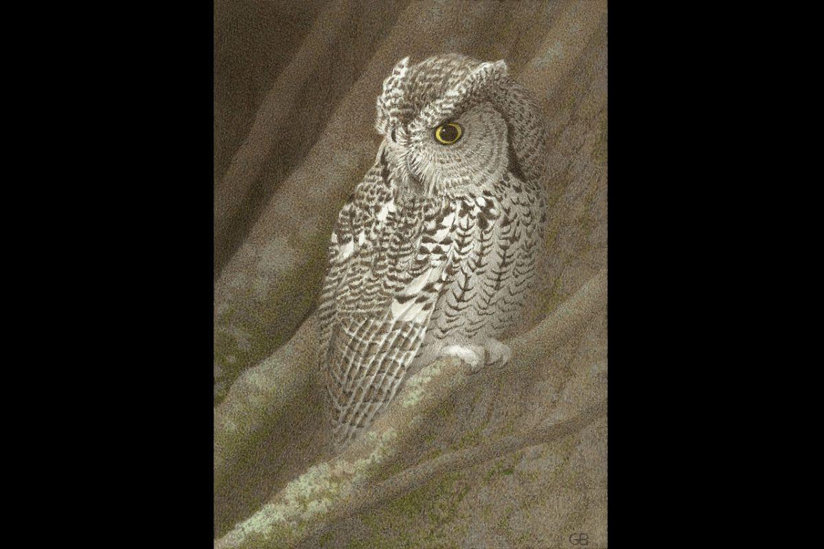 Gail Bunting: Naturalist and Painter