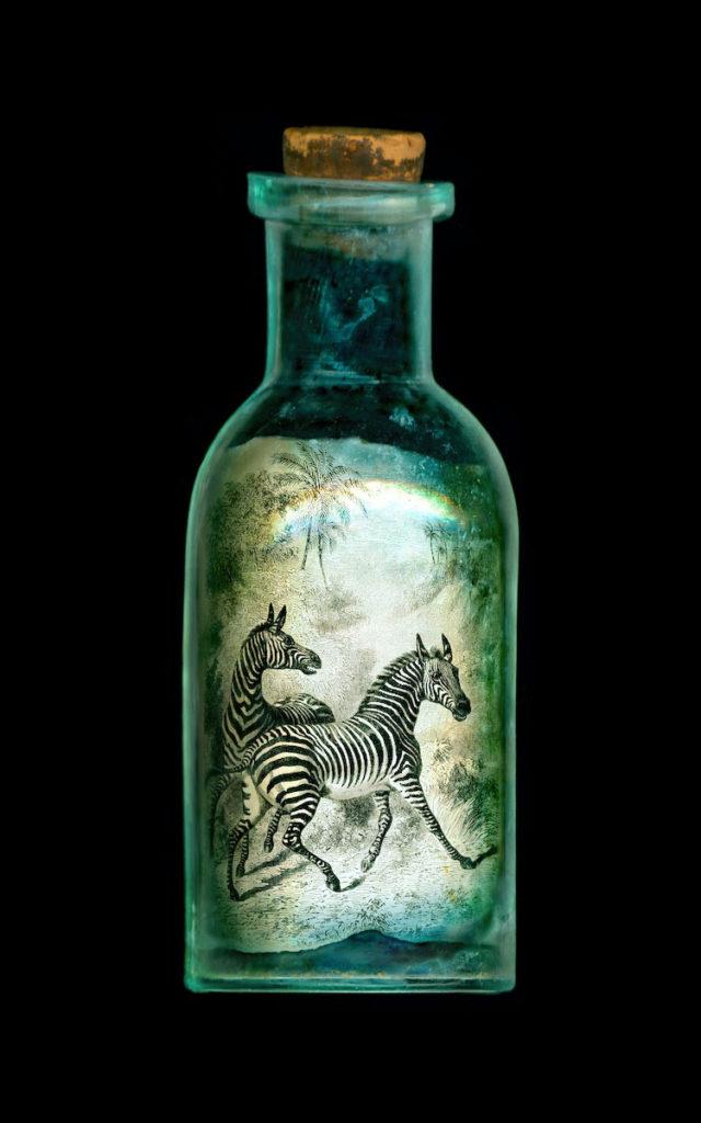 Zebras in Love by Charlie Bremer