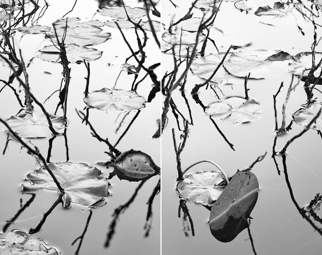 Lilies diptych by Drew Harty