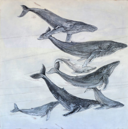 Humpback Whales by Lynn Johnson