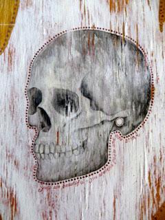 Skull by Anna Sea
