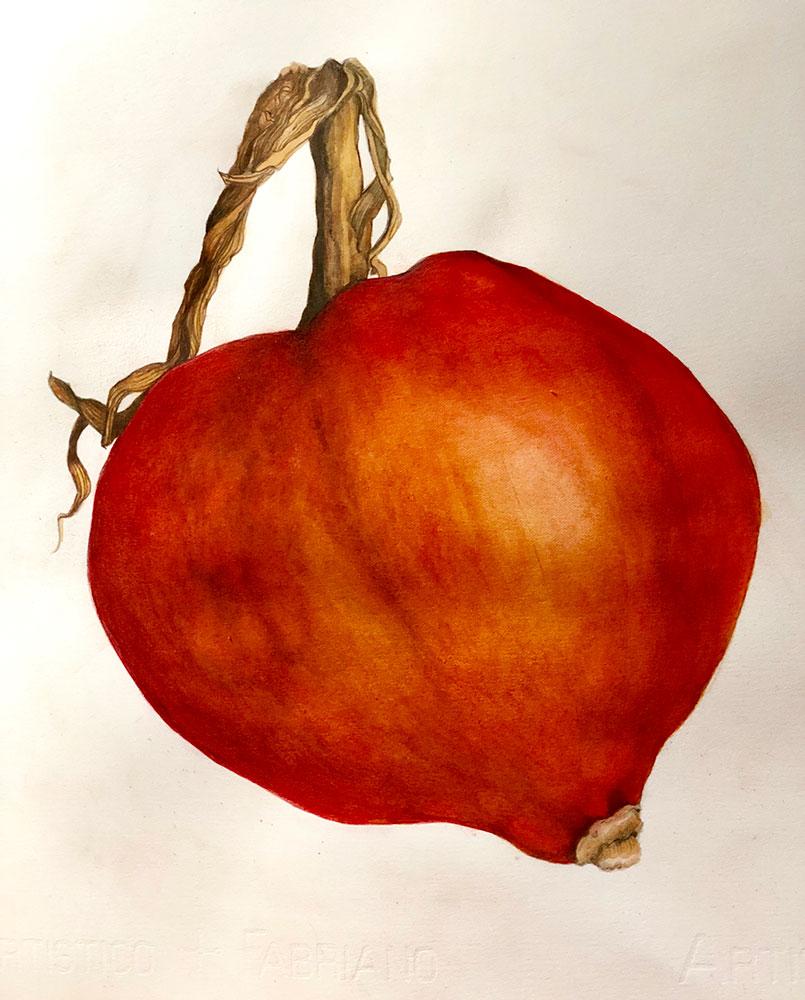 Cucurbitaceae Red Orange